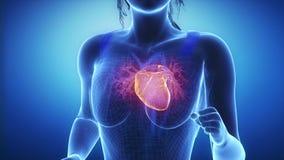 La mujer que activa con la exploración del corazón en la cámara lenta enfoca ilustración del vector