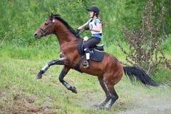 La mujer que el eventer en caballo está supera el salto de esquí Fotografía de archivo