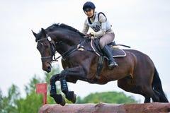 La mujer que el eventer en caballo está supera la cerca del registro Fotografía de archivo libre de regalías