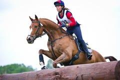 La mujer que el eventer en caballo está supera la cerca del registro Foto de archivo libre de regalías
