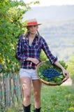 La mujer recorre con la cosecha de uvas Imagen de archivo