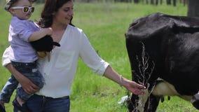 La mujer resuelve la vaca almacen de metraje de vídeo