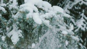La mujer sacude apagado la nieve 7 almacen de video