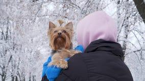 La mujer se coloca con ella de nuevo a la cámara, sosteniendo el pequeño terrier de Yorkshire cubierto en toalla Adolescente y un almacen de metraje de vídeo