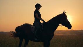 La mujer se sienta en un caballo, vista lateral Un atleta monta en un caballo en un fondo de la puesta del sol en el campo metrajes