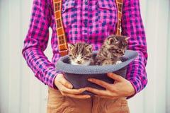 La mujer sostiene el sombrero con los gatitos Imagen de archivo libre de regalías