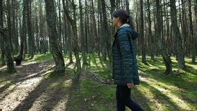 La mujer toma una imagen de árboles en bosque en el teléfono