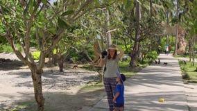 La mujer toma una imagen de un mono de macaque que se sienta en el árbol Isla del mono, Vietnam almacen de video
