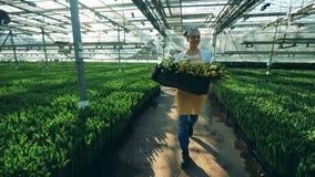 La mujer trabaja en un invernadero, caminando con el manojo de tulipanes almacen de video