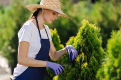 La mujer utiliza la herramienta que cultiva un huerto para arreglar el seto, cortando arbustos con esquileos de jardín fotografía de archivo