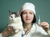 La mujer veterinaria toma el cuidado del gato Fotos de archivo libres de regalías