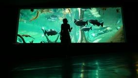 La mujer viene a la piscina de cristal del oceanarium, mirando en pescados grandes de la natación metrajes