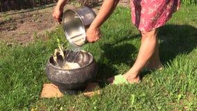 La mujer vierte la agua caliente de ebullición en pájaro muerto del pollo tomatero en pote metrajes