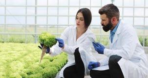 La mujer y el hombre en trajes del laboratorio examinan cuidadosamente las plantas en el invernadero almacen de video