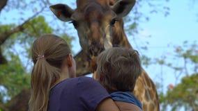 La mujer y su hijo alimentan una jirafa en un parque del safari almacen de video