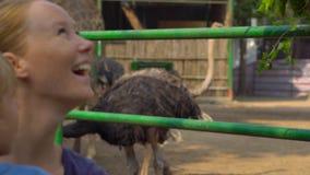 La mujer y su hijo alimentan una jirafa en un parque del safari metrajes