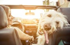 La mujer y su labradoodle persiguen la conducción con el coche Imágenes de archivo libres de regalías