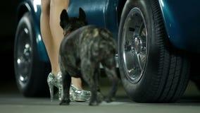 La mujer y su perro caminan al coche azul y abren la puerta almacen de metraje de vídeo