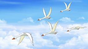 La multitud de cisnes vuela en el cielo