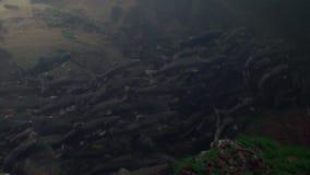 La multitud de los pescados de color salmón nada para frezar bajo el agua en el océano de Alaska almacen de metraje de vídeo