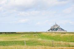 La multitud de ovejas acerca a la abadía de santo-Miguel del mont Fotos de archivo