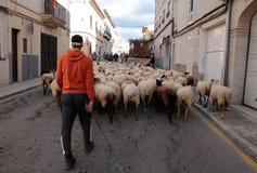 La multitud de ovejas llevó por el pastor en los animales de St Anthony que bendecían día Imagenes de archivo