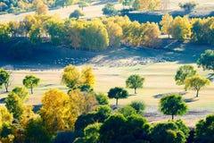 La multitud de ovejas o de cabras en el prado del otoño Imagenes de archivo