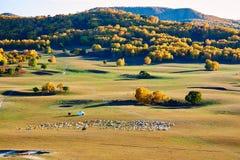 La multitud de ovejas o de cabras en el prado del otoño Fotografía de archivo