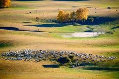 La multitud de ovejas o de cabras en los prados Fotografía de archivo
