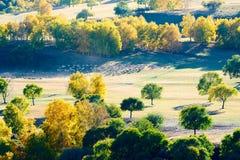 La multitud de ovejas o de cabras en los prados del otoño Imágenes de archivo libres de regalías