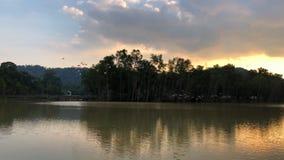 La multitud de pájaros está volando sobre el lago metrajes