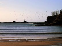 La multitud de pájaros sobre puesta del sol aúlla Foto de archivo libre de regalías