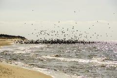 La multitud muy grande de pájaros vuela en la costa Imagen de archivo libre de regalías