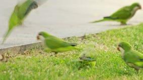 La multitud repite mecánicamente los pájaros que caminan en parque del verano Repite mecánicamente pájaros en parque de la ciudad metrajes