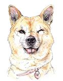 La museruola dell'acquerello di un cane rosso sbatte le palpebre con un sorriso e andar in giroe della lingua illustrazione di stock