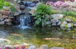 La nadada de Koi abajo fluye más allá de la cascada rodeada por las flores y el verdor Imagenes de archivo