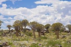 La Namibia, foresta dell'albero del fremito, Keetmanshoop, Namibia del sud Fotografia Stock