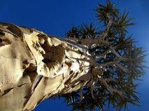 La Namibia, Naukluft, Fremito-albero fotografie stock libere da diritti