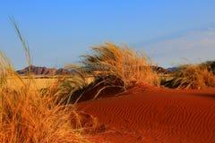 La Namibia - paesaggio tipico fotografie stock libere da diritti