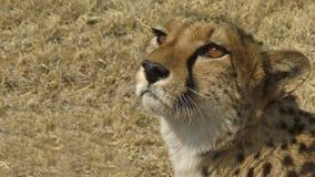 La Namibia, parco di Etosha fotografia stock libera da diritti