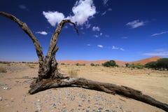 La Namibia Wüste Namib Fotografie Stock