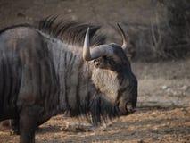 La Namibie, Damaraland, parc d'Etosha photos stock