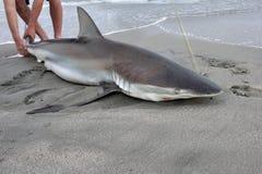 La Namibie, pêche de requin photographie stock