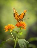 La naranja del color Imagen de archivo libre de regalías