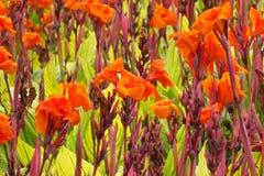 La naranja florece el fondo Foto de archivo libre de regalías