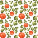 La naranja florece el physalis y el verde se va en el fondo blanco Modelo inconsútil de la acuarela libre illustration