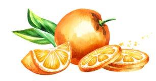 La naranja fresca da fruto composición Ejemplo dibujado mano de la acuarela, en el fondo blanco stock de ilustración