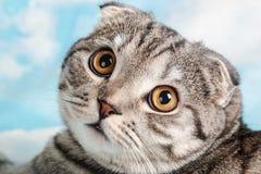 La naranja observa el gato Fotos de archivo libres de regalías