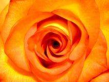 La naranja se levantó foto de archivo libre de regalías