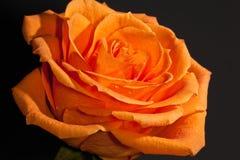 La naranja se levantó imagen de archivo